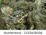 old wooden stump  snag  close... | Shutterstock . vector #1152628106