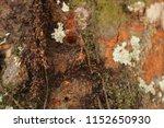 partially blur of tree texture | Shutterstock . vector #1152650930