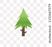 spruce vector icon isolated on... | Shutterstock .eps vector #1152667079