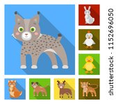 toy animals flat icons in set...   Shutterstock .eps vector #1152696050