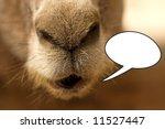 Donkey Sayas Something