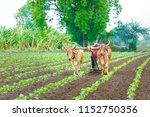 Indian Farmer Working Green...