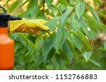 gardener applying insecticidal...