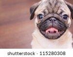 the pug puppy closeup. | Shutterstock . vector #115280308
