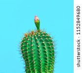 fashion cactus with flower in... | Shutterstock . vector #1152849680