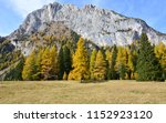 The Colorful Forest Under The...