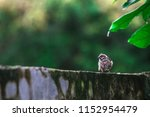 the sparrow perched on old... | Shutterstock . vector #1152954479