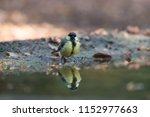 great titmouse in reflection  | Shutterstock . vector #1152977663