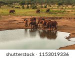 from the plains of kenya to the ... | Shutterstock . vector #1153019336