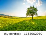 Landscape With Meadow  Tree An...