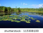 water lilies on small lake | Shutterstock . vector #115308100