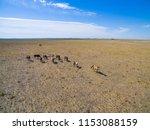 troop of horses  on the plain ... | Shutterstock . vector #1153088159