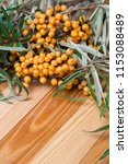 sea buckthorn oil and berries... | Shutterstock . vector #1153088489