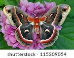The Beautiful Giant Silk Moth...
