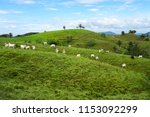 Pasture Land In Chiriqui...