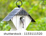 chicadee prepares to feed its... | Shutterstock . vector #1153111520