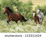 Stock photo herd of running horses 115311424