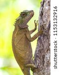 lizard lays on a tree in the... | Shutterstock . vector #1153132916