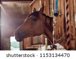 Horse in stable. beautiful...