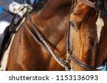 Dark Eyed Racehorse. Beautiful...