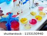 petri dish. microbiological...   Shutterstock . vector #1153150940