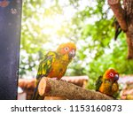 two yellow parrot perched on a... | Shutterstock . vector #1153160873
