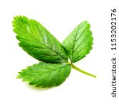 leaf of the strawberry on the... | Shutterstock . vector #1153202176