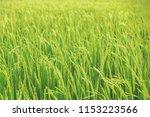 beautiful view of rural green... | Shutterstock . vector #1153223566