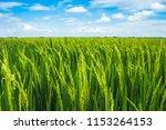 beautiful view of rural green... | Shutterstock . vector #1153264153