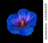 Floral Bright Color Macro...