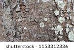mahogany trees behind the house ... | Shutterstock . vector #1153312336