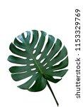 dark green leaves of monstera... | Shutterstock . vector #1153329769