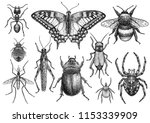 insect collection illustration  ... | Shutterstock .eps vector #1153339909