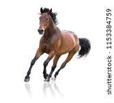 Bay Horse Runs Isolated On The...