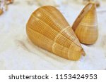 shells placed on the sand. | Shutterstock . vector #1153424953