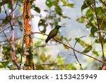 beautiful little bird | Shutterstock . vector #1153425949