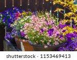 beautiful  summer garden with... | Shutterstock . vector #1153469413
