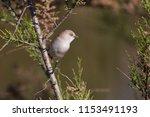 beautiful bird on tree | Shutterstock . vector #1153491193