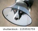 a border collie dog wearing a... | Shutterstock . vector #1153531753