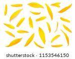Stock photo sunflower petals isolated on white background flat lay top view 1153546150