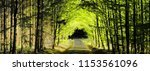 Forest Road Between Broad Leaf...