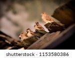 five birds sitting on the top... | Shutterstock . vector #1153580386