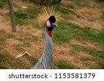 Spiky Haired Bird Aka East...
