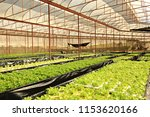 Non Toxic Vegetable Crops In...