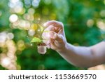 hand clicks on sprout in the... | Shutterstock . vector #1153669570