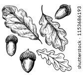 oak leaves and acorn. hand... | Shutterstock .eps vector #1153686193