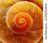 Housing Of A Marine Snail