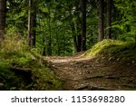 path in forest.  | Shutterstock . vector #1153698280