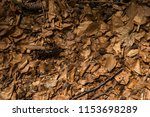 old leafs background | Shutterstock . vector #1153698289