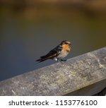 a dainty delightful  little... | Shutterstock . vector #1153776100